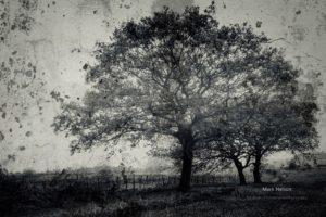 nature, Landscape, Trees, Monochrome