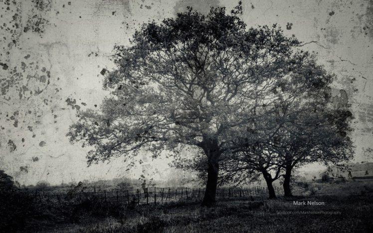 nature, Landscape, Trees, Monochrome HD Wallpaper Desktop Background