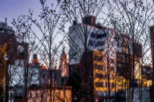 New York City, Building, Cityscape, Twigs, Depth of field