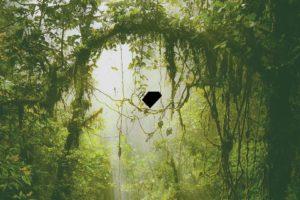 jungle, Green, Trees