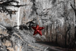 trees, Christmas, Christmas ornaments