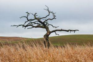 trees, Field, Landscape