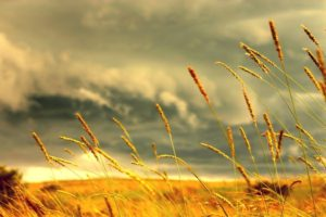 crops, Clouds