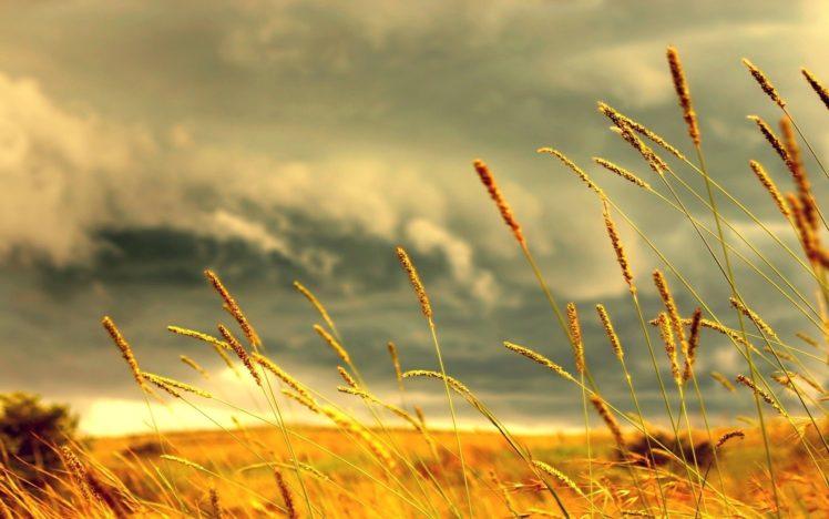 crops, Clouds HD Wallpaper Desktop Background