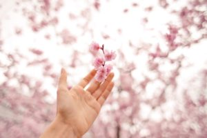 hands, Nature, Flowers, Depth of field, Blossoms, Bokeh
