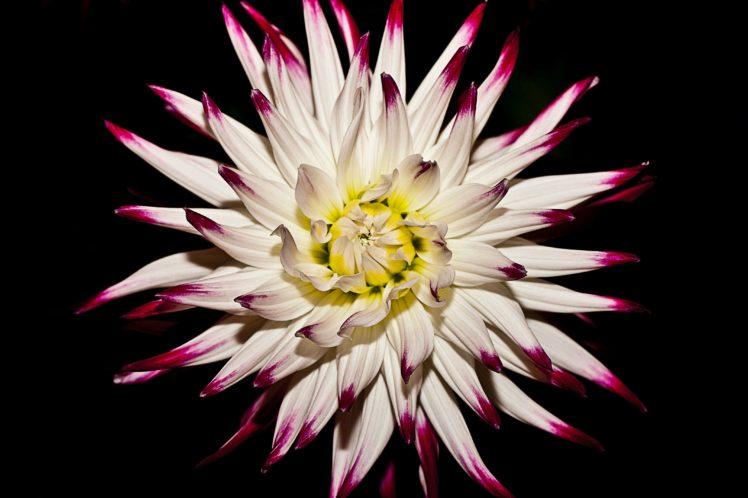 nature, Flowers HD Wallpaper Desktop Background