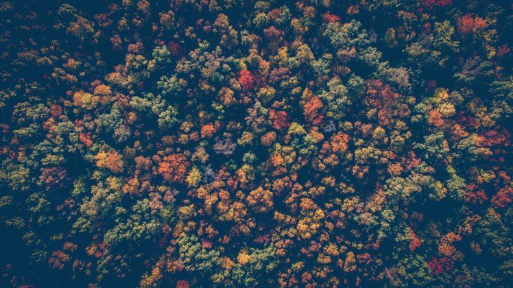 nature, Trees HD Wallpaper Desktop Background