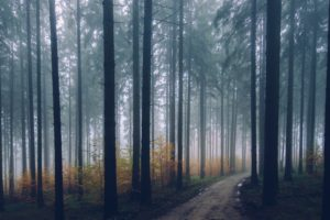 nature, Trees, Road, Path, Forest, Mist, Depth of field