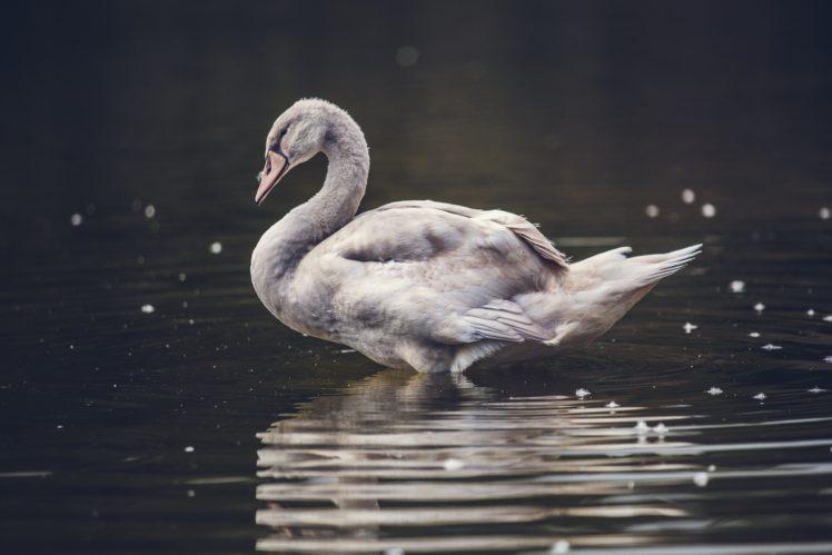 nature, Animals, Water HD Wallpaper Desktop Background