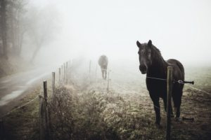horse, Mist, Landscape, Animals