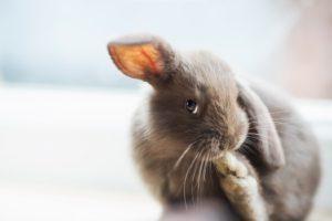 animals, Rabbits