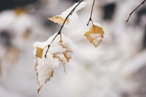 winter, Snow, Leaves, Cold