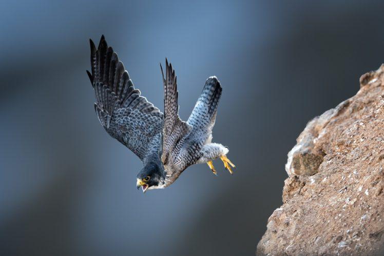 Photography Animals Birds Bird Of Prey Wildlife Hd Wallpapers Desktop And Mobile Images Photos