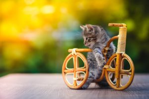 nature, Animals, Cat, Kittens, Baby animals, Bicycle, Miniatures, Wood, Wooden surface, Depth of field, Outdoors