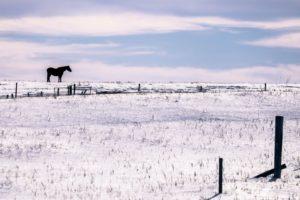 horse, Winter, Animals, Landscape