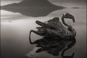 creepy, Dead, Nature, Landscape, Animals, Monochrome, Lake Natron, Tanzania, Africa, Salt lakes, Hills, Reflection, Birds, Feathers