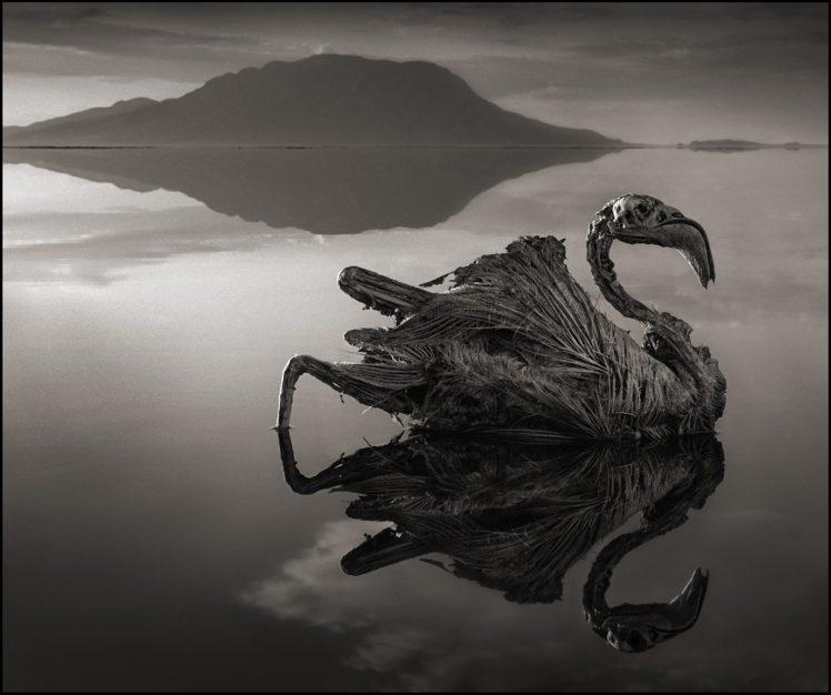 creepy, Dead, Nature, Landscape, Animals, Monochrome, Lake Natron, Tanzania, Africa, Salt lakes, Hills, Reflection, Birds, Feathers HD Wallpaper Desktop Background