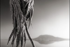 creepy, Dead, Nature, Landscape, Animals, Monochrome, Lake Natron, Tanzania, Africa, Salt lakes, Hills, Reflection, Birds, Branch, Portrait display