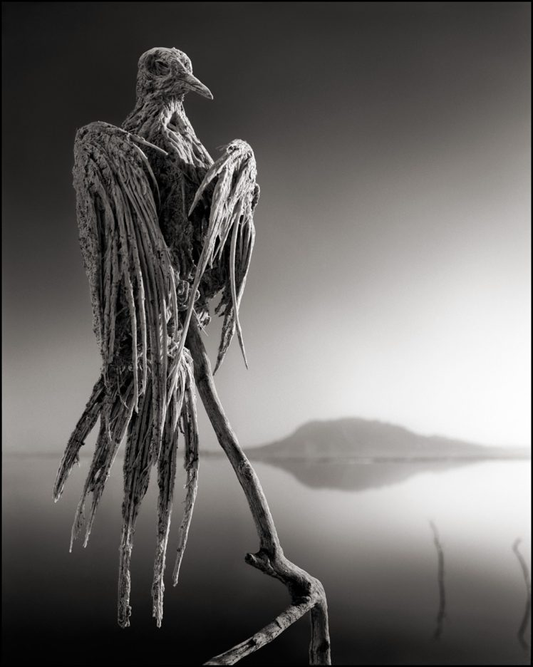 creepy, Dead, Nature, Landscape, Animals, Monochrome, Lake Natron, Tanzania, Africa, Salt lakes, Hills, Reflection, Birds, Branch, Portrait display HD Wallpaper Desktop Background