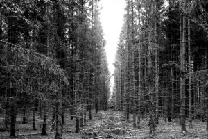 forest, Nature, Dead trees, Monochrome