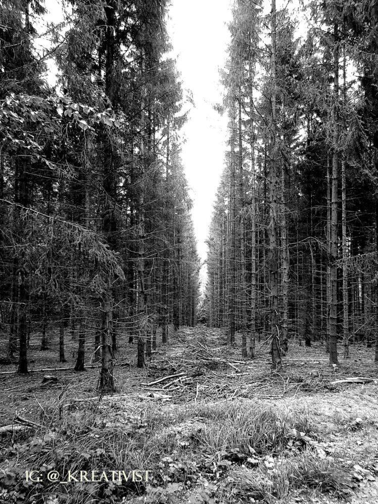 forest, Nature, Dead trees, Monochrome HD Wallpaper Desktop Background