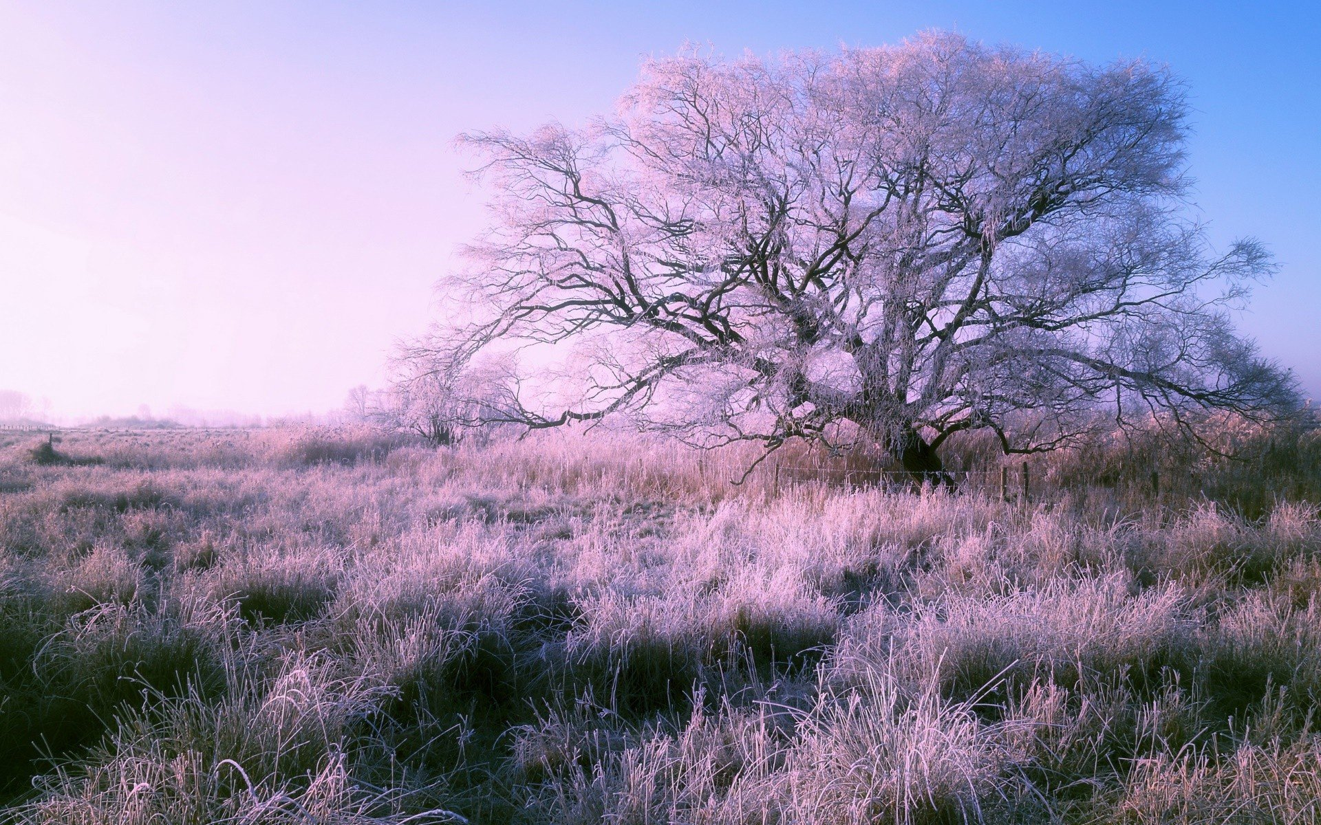 Winter nature cold landscape trees hd wallpapers - Wallpaper hd nature winter ...