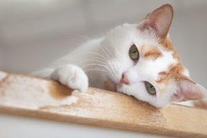 cat, Wood