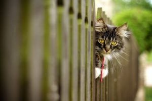 cat, Fence, Animals