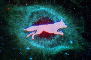 space, Dog