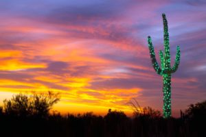 nature, Landscape, Arizona, USA, Trees, Forest, Cactus, Lights, Sunset, Clouds