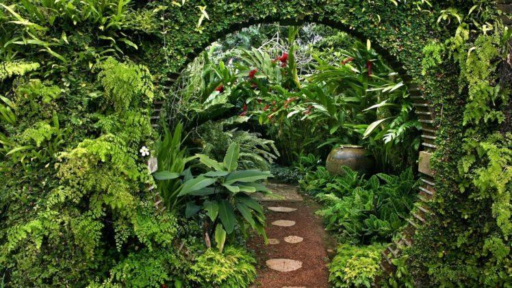 Nature Landscape Garden Leaves Plants Flowers Ferns Sri Lanka