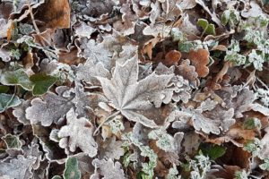 cold, Ice, Winter, Leaves