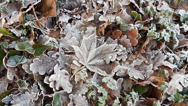 cold, Ice, Winter, Leaves HD Wallpaper Desktop Background