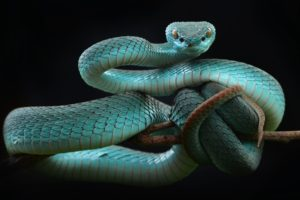 snake, Animals, Reptiles