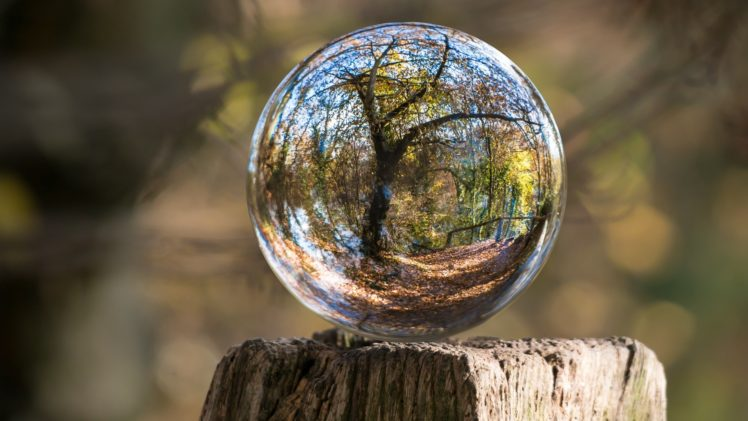 nature, Landscape, Trunks, Wood, Sphere, Glass, Reflection, Trees, Fall, Leaves, Depth of field, Distortion HD Wallpaper Desktop Background