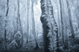 trees, Forest, Frost, Winter