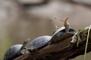 turtle, Butterfly