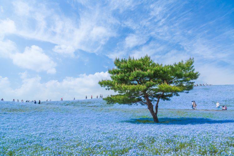 blue, Japan, Sky, Trees, Blue flowers HD Wallpaper Desktop Background