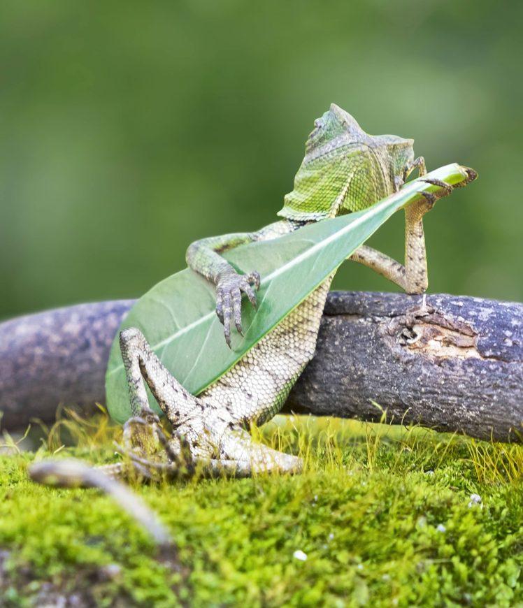 Lizards Guitar Hd Wallpapers Desktop And Mobile Images Photos