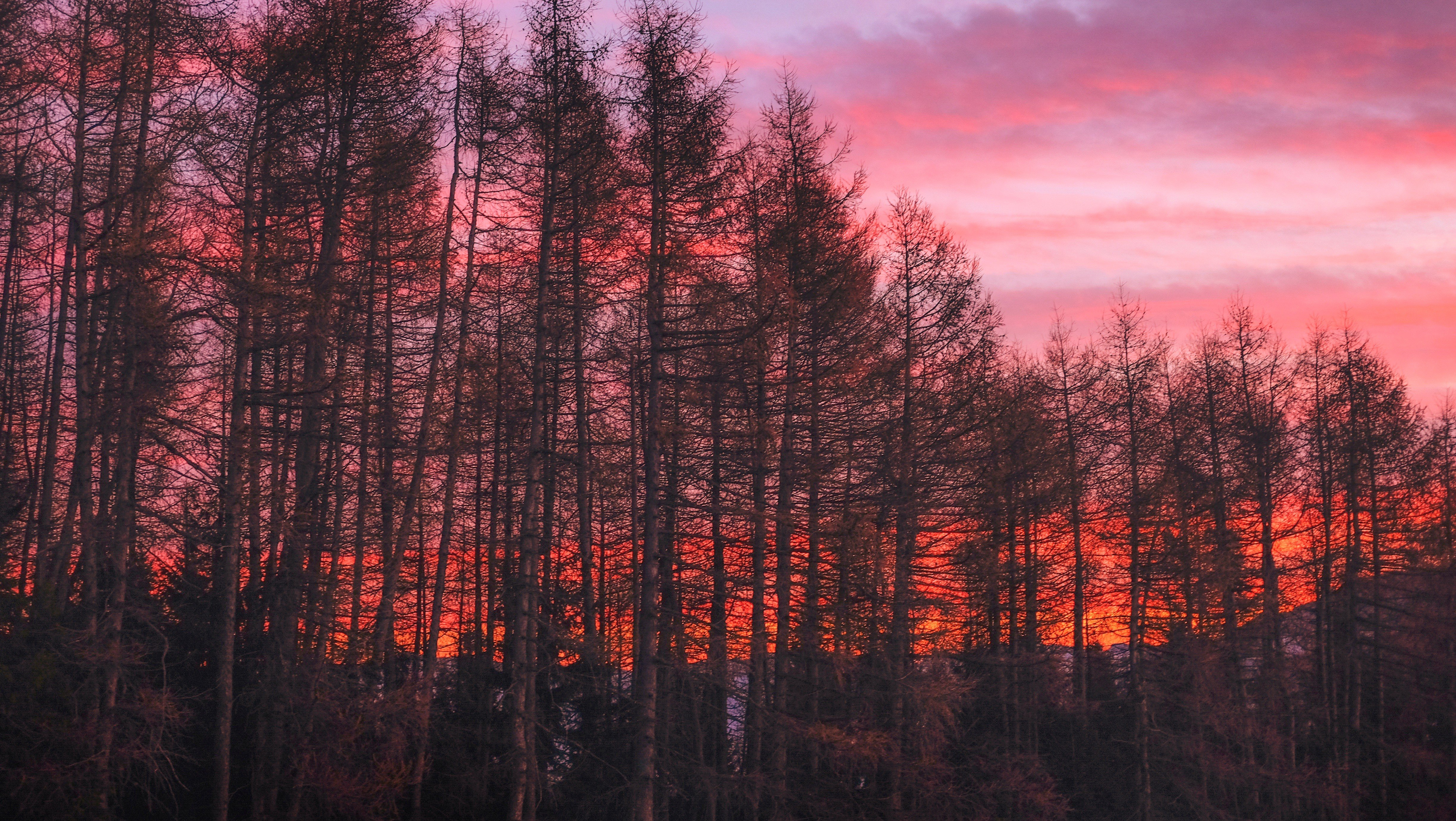 Nature Trees Clouds Hdr Forest Sunset Hd Wallpapers