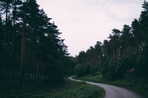 nature, Road, Trees, Forest, Depth of field, Path
