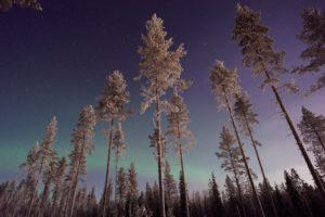 nature, Trees, Aurorae