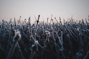 winter, Cold, Ice, Plants