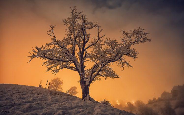 winter, Snow, Trees, Sunlight, Nature, Landscape HD Wallpaper Desktop Background