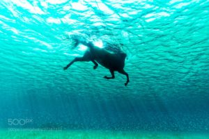 Kurt Arrigo, Water, Underwater, Nature, Animals, Swimming, Horse, Sunlight, 500px, Sea