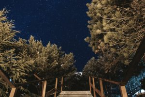 photography, Night sky, Trees, Starry night