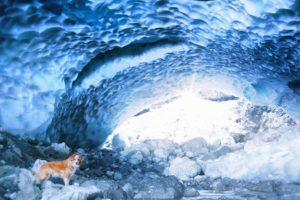 cave, Ice, Dog, Animals, Nature