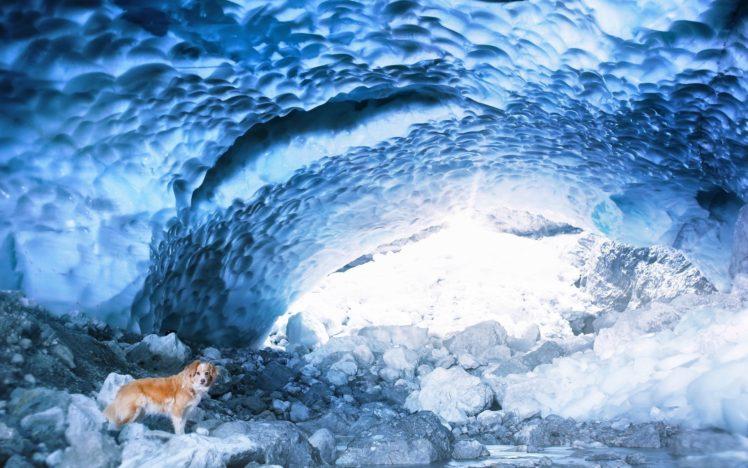 cave, Ice, Dog, Animals, Nature HD Wallpaper Desktop Background