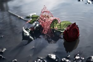 water, Flowers, Rose