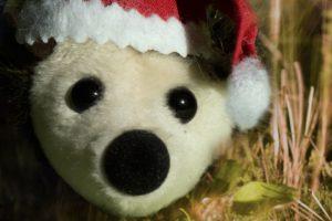 Christmas, Hedgehog, Santa hats